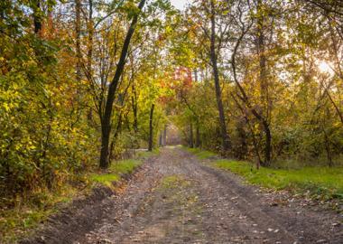 Ландшафтный заказник местного значения «Лузановский лес»