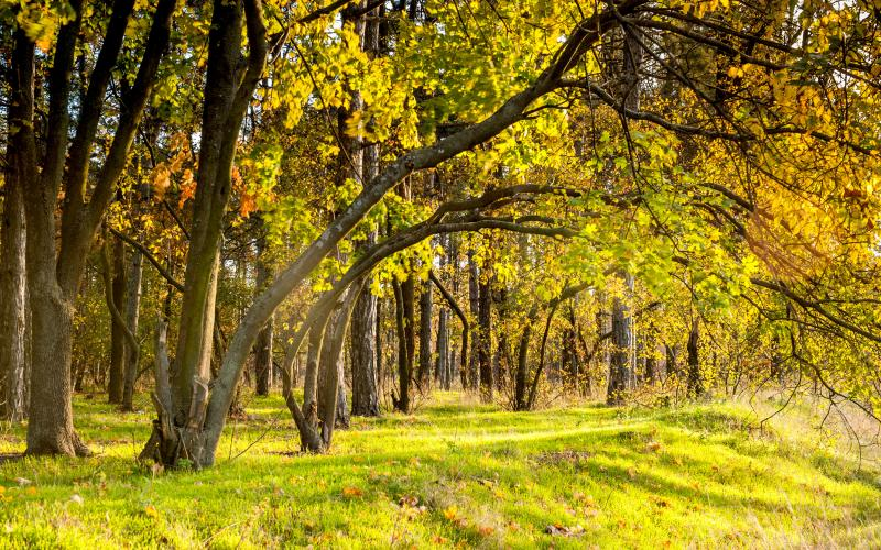 Сосновый берег 50.jpg