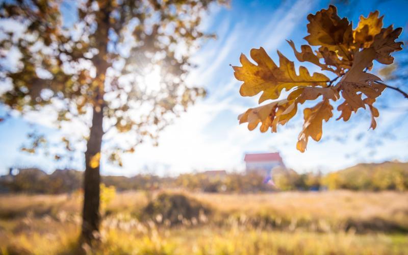 Сосновый берег - осень 06.jpg
