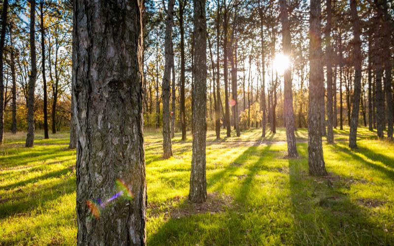 Сосновый берег - осень 13.jpg