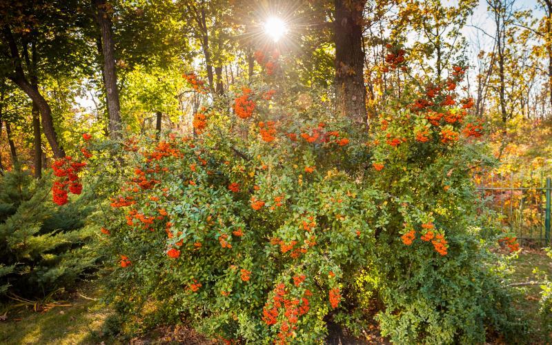 Сосновый берег - осень 15.jpg