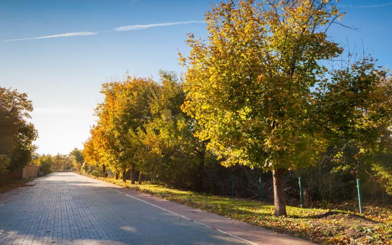 Сосновый берег - осень 21.jpg