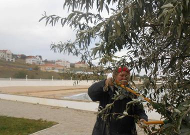 Подготовка к зиме - подрезка деревьев