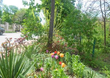 Весеннее цветение в «Сосновом берегу»