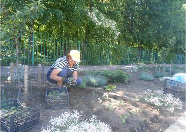Весенняя высадка растений