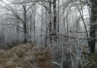 Очистка леса от сухостоя