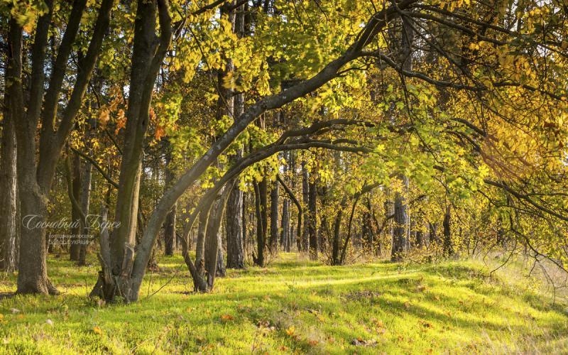 Sosnoviy Bereg - autumn 15.jpg