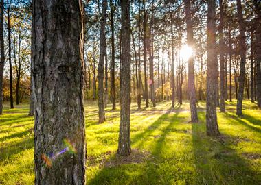 Сосновый берег - это вдохновляющая природа и безупречная экология.